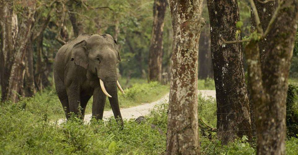 dooars tourism package from kolkata