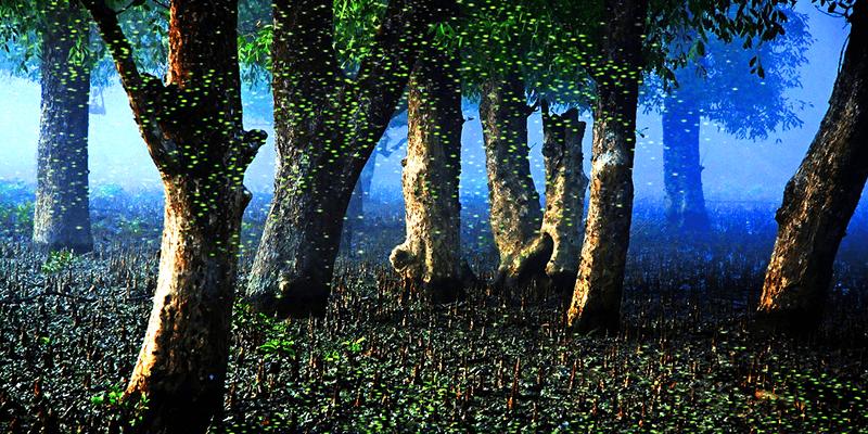 Sundarban tour from Kolkata