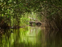 Why Mangrove forests are so crucial for our biodiversity and The Sundarban?
