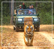 bandhabgarh jeep safari