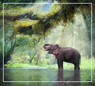 Elephant at Dooars