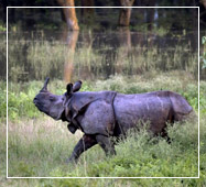 Rhino at Dooars