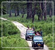 gorumara national park jeep safari