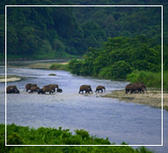 gorumara national park tour package