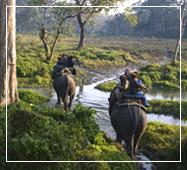 jaldapara National Park Elephant Safari