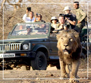 jeep safari in gir