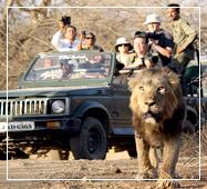 jeep safari in gir