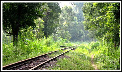lataguri jungle