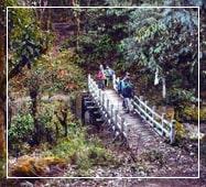 phalut-sandakphu-trek-guide-from-kolkata