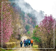 phalut sandakphu trek  package itinerary
