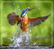 sundarban birdlife photography