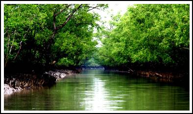 sundarban cricks
