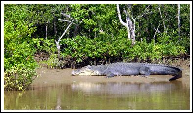 sundarban crocodile adventure