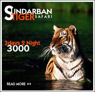 sundarban info
