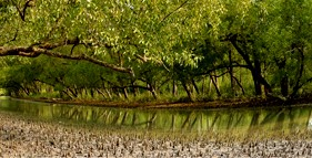 sundarban jungle tour