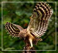 sundarban nature and wildlife photography