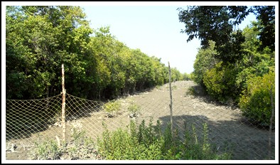sundarban forest net