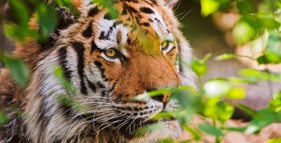 sundarban package