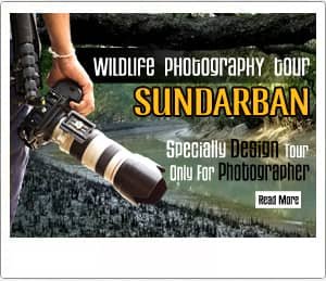 sundarban photography tour 2018