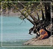 sundarban safari photography
