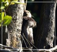 sundarban the best wildlife safaris in india