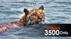 sundarban tour package