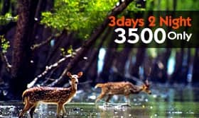 sundarban the magical mangrove