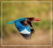 wild animal photography tour