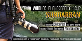 Sundarban Wildlife Photography tour