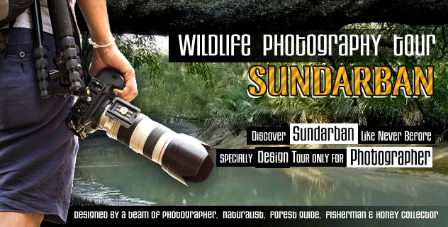 wildlife photography tour
